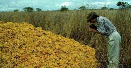 Производители газировки выбрасывали корки апельсина. Вот как выглядит 16 лет спустя то самое место!